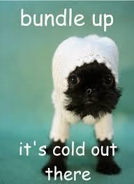 pets-cold-41