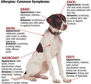 a_allergies_pet_guide_2